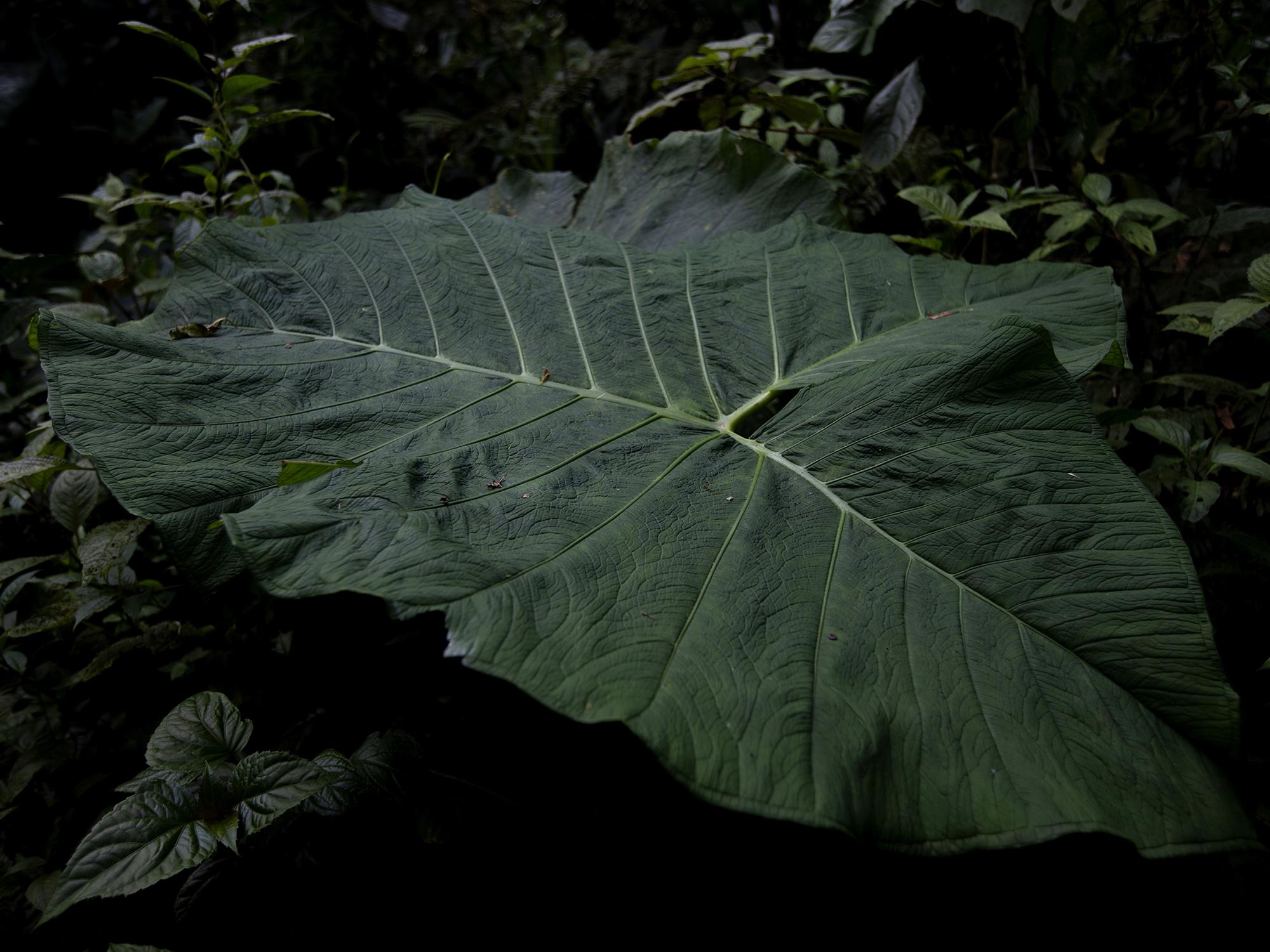 leaf_site